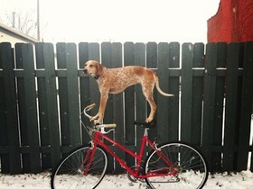 超強平衡感狗狗!什麼地方都能站上去,踏遍全美國讓你拍照