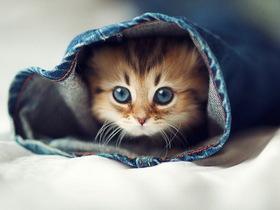 超萌貓咪拍照術,Ben Torode 教你拍出絕妙小貓表情