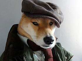 柴犬化身型男教主,教你如何穿出最潮Look!