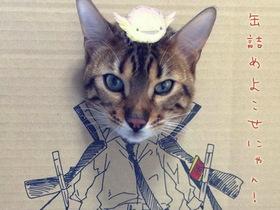 寵物貓咪變裝趴,利用紙箱讓愛貓也玩 Cosplay