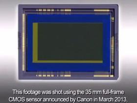 Canon 超高感度全片幅 CMOS 實拍影像,拍攝螢火蟲動態影像