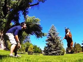 寵物攝影玩很大,52台 GoPro 攝影機拍 狗狗 Style的 子彈時間