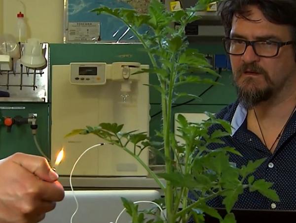 植物也有自己的語言?科學家捕捉植物生物信號,當成生物感應器 | T客邦