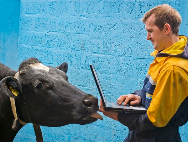 WellCow 檢測乳牛的胃,分析胃裡的溫度、胃酸濃度,讓牛隻更健康