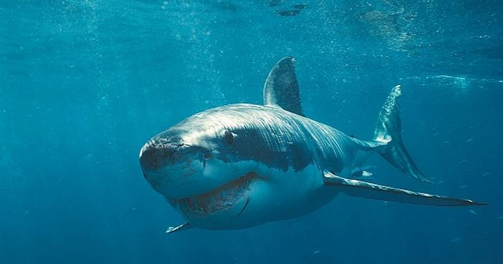 Google的海底電纜「FASTER」即將上線,它不僅要防地震防海嘯,還要防鯊魚 | T客邦