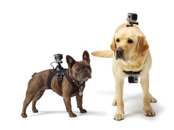 GoPro寵物套件 Fetch,讓你家愛犬變成 狗Pro