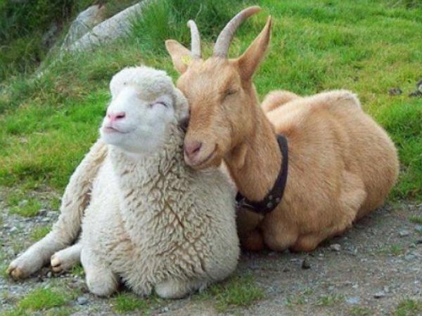 羊年版 農曆年安太歲、禁忌小攻略:初一忌洗頭、初二忌洗衣、初三忌出門……