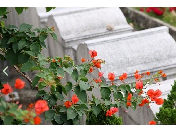 清明時節雨紛紛,香港墳場舉辦墓地主題攝影比賽