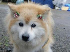 【爆八卦專欄】26歲的長壽狗?寵物界人瑞大集合~