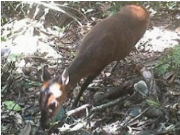 林務局技士太懶,監測生態相片利用修改EXIF資訊交差了事被抓包
