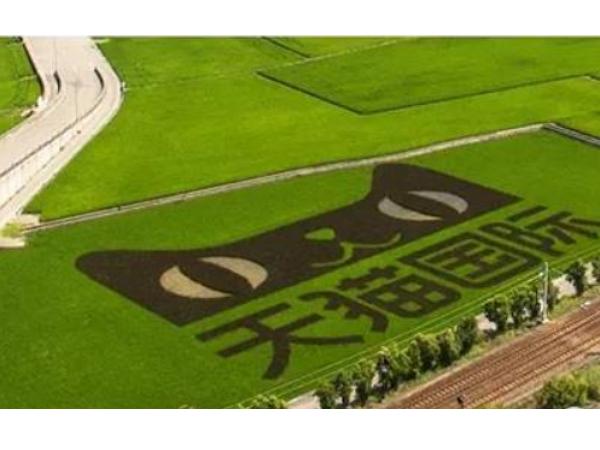 回應雙11天貓賣米爭議,PayEasy:台灣米要跨境,只剩下中國這條路