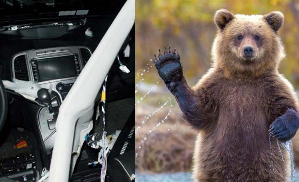 Toyota神車也不敵熊掌,內裝全毀直接報廢