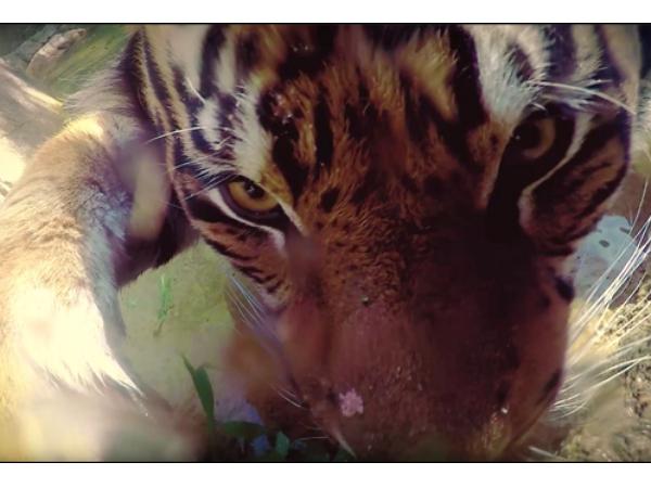 在 Google 的幫助下,動物們也玩起了自拍
