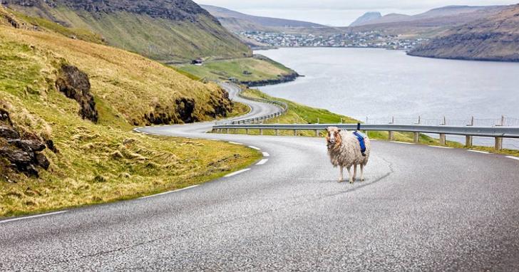 Google竟然真的用了一群羊來拍攝這個島上的街景地圖