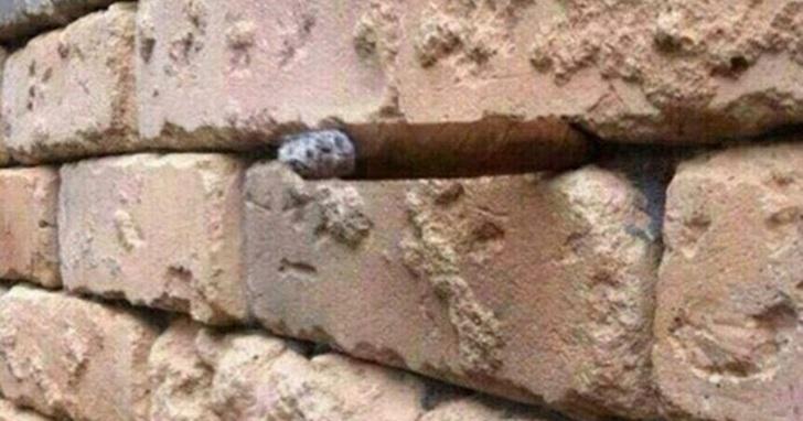 再度把網友搞瘋的視覺圖:這面磚牆裡頭藏了一個東西,你看出來了嗎?