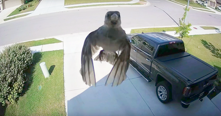 這則小鳥在空中漂浮的神奇影片,原來與一項攝影原理息息相關
