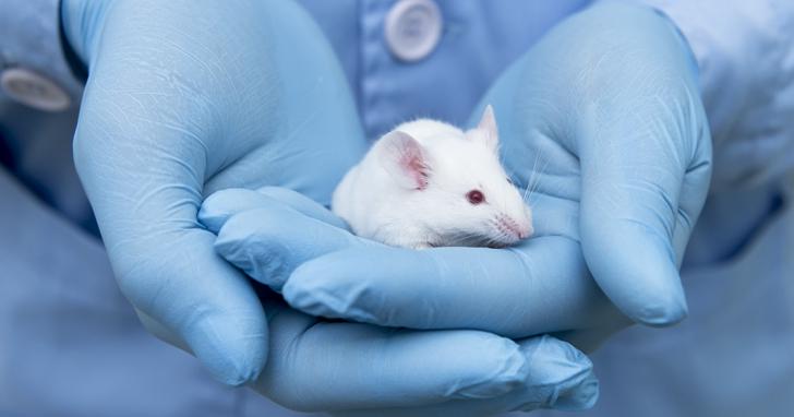 AI就能測試化妝品,能讓「白老鼠」永遠走出實驗室了嗎?