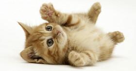 貓咪到底該怎麼抱?外國獸醫博士用影片親自教學!