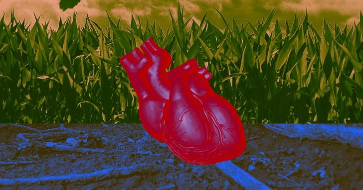 科學家培育出心臟組織,可以和真正的心臟一樣跳動