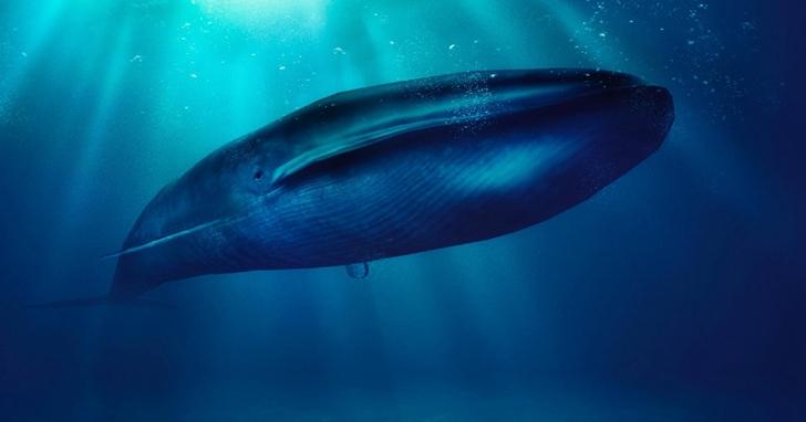 鯨魚的糞便如此「珍貴」!維持南極水域營養平衡全靠它