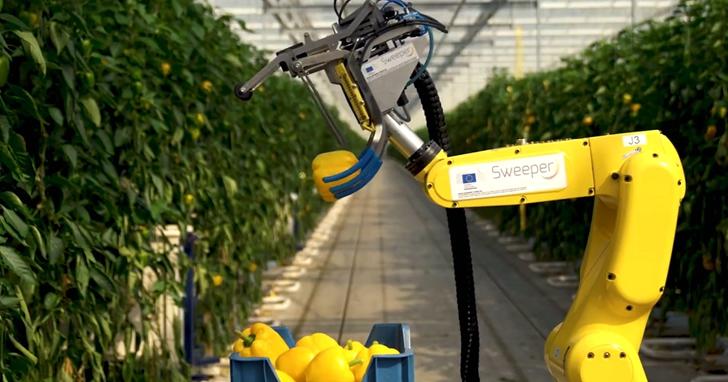 農業收成機器人盯著辣椒24 秒,就能判斷是否成熟然後自動摘取