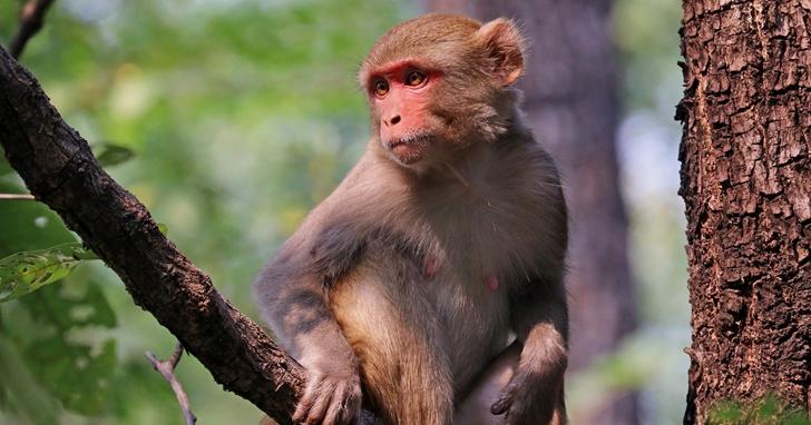 美國開發出新型愛滋病疫苗,在猴子身上實驗證實有效