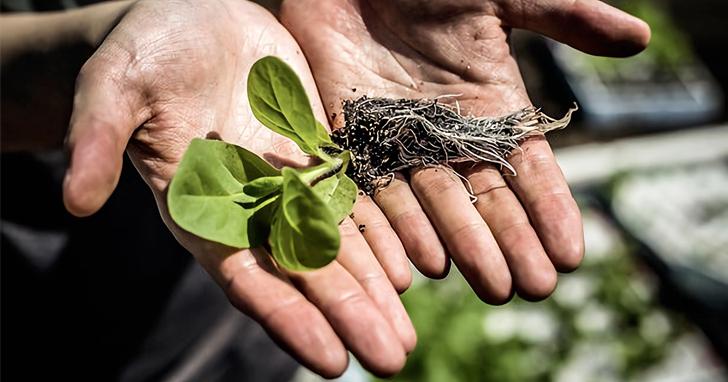 科學家破解植物光合作用,有望使作物產量提高40%的超級農作物要來了