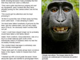 猴子的把玩相機的自拍照,版權是誰的?