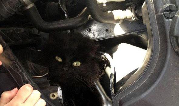 卡在 BMW引擎室裡2個星期的霹靂貓!據說發誓再也不坐德國車了!