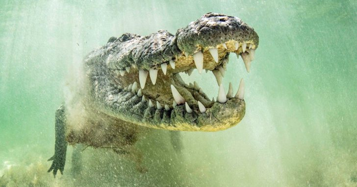 地球上咬合力最強大的10種動物