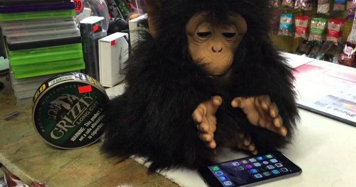 研究發現猴子可能比你更會玩解謎遊戲,只要給他一根香蕉
