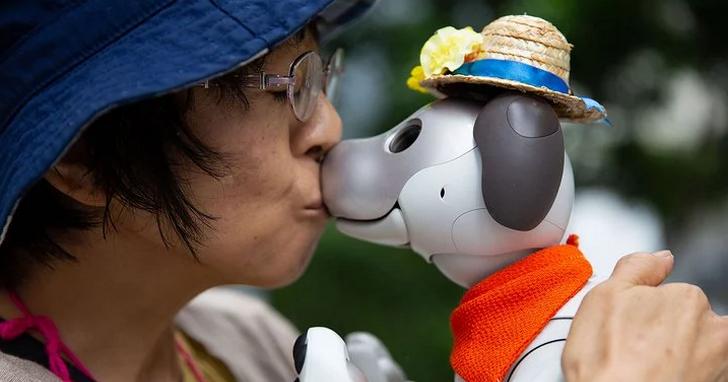 對於這些日本人來說,Aibo 並不是一隻機器狗、而是他們的家人