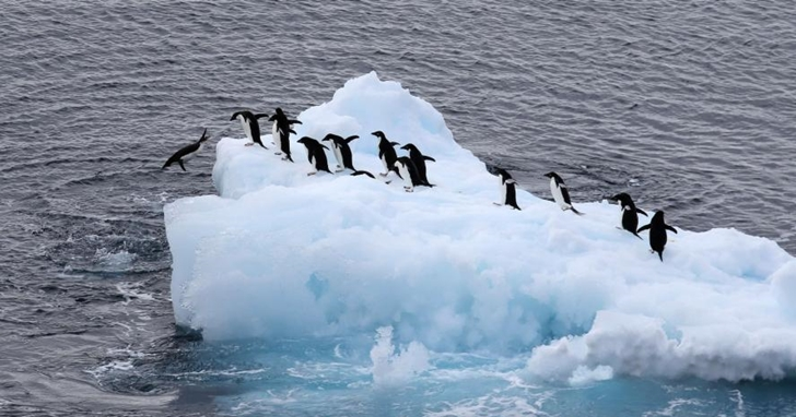 一周內「反常」破兩次高溫紀錄,南極洲溫度飆到 20.7 度