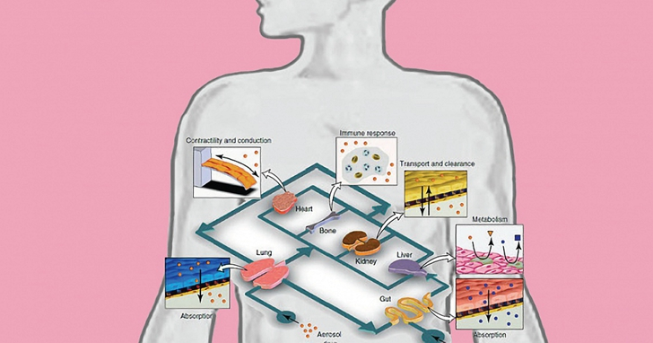 MIT教授開發「晶片上的器官」模型,和「人造器官」不太一樣?