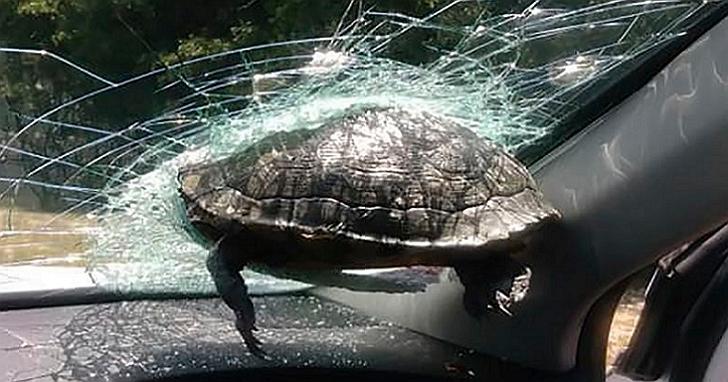 美國女子開車在高速公路上遇到「天外飛龜」!網友表示根本瑪利歐賽車真人版