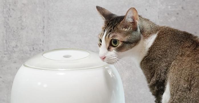 鏟屎官的小幫手!Wime 智慧貓砂盆 + 智慧飲水器全方位守護貓咪健康