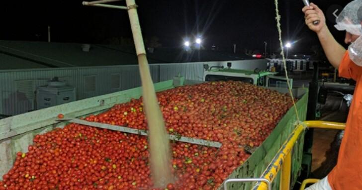 新疆棉花之後新疆番茄接力,日本蕃茄醬大廠「可果美」禁用新疆番茄