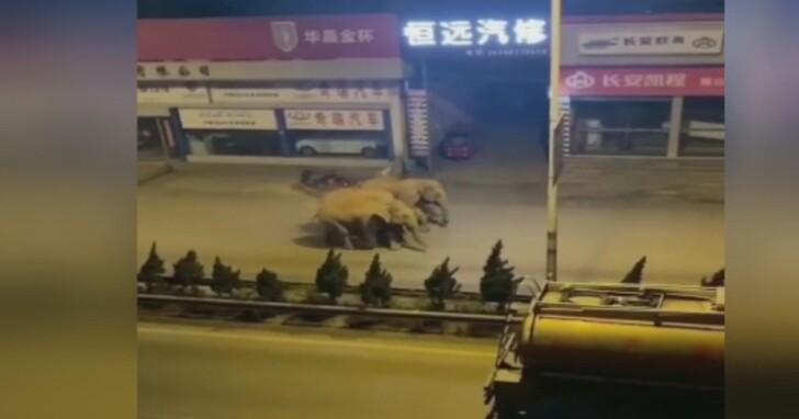 「野蠻遊戲」真人版?雲南大馬路上出現15頭野生亞洲象逛大街