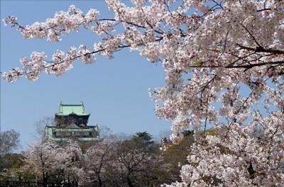 Google 推出街景旅遊導覽,首推日本櫻花季