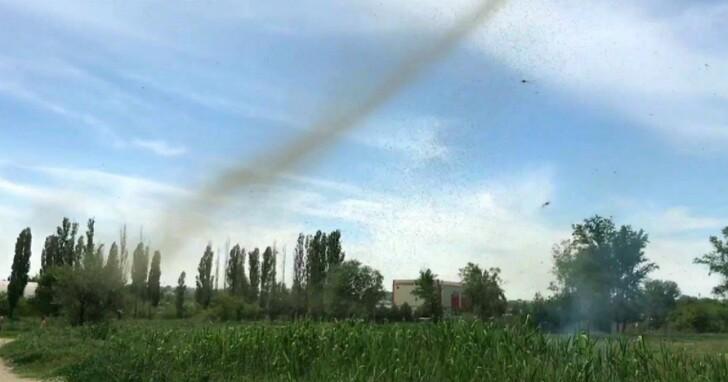 頻繁出現的「蚊子龍捲風」現象,凸顯了氣候變化的巨大影響