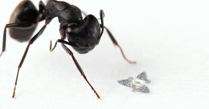 史上最小的微型人造飛行器,僅一粒沙子大,能搭載複雜積體電路
