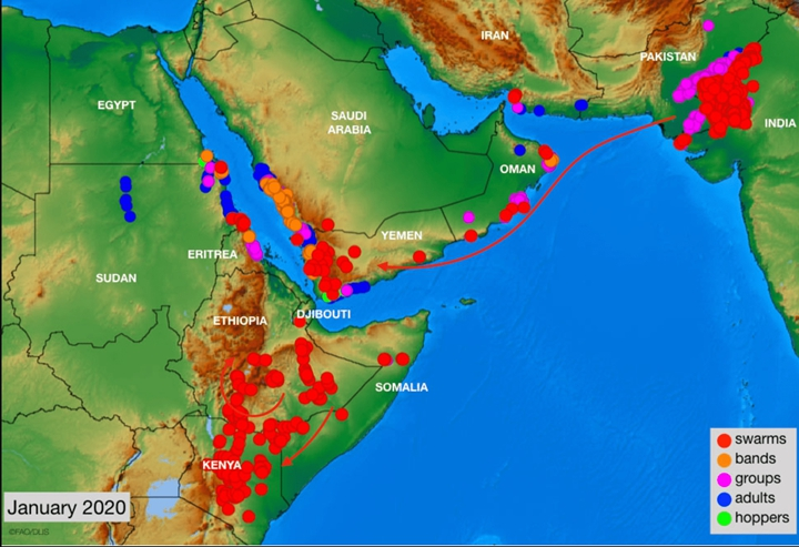 截至1月的蝗災影響地。圖片來源:聯合國糧農組織