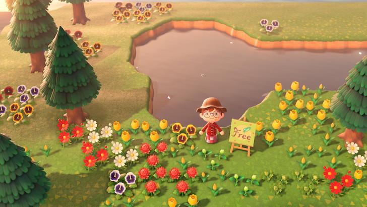 花雖然可隨便種,建議還是集中在某處比較好管理。
